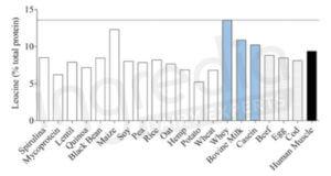 Concentration Leucine sources protéines