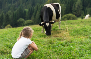 animal welfare CSR policy